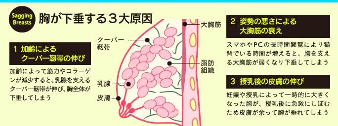 胸が下垂する3大原因「加齢」「姿勢の悪さ」「授乳」
