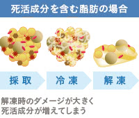 脂肪が受ける冷凍保存の影響