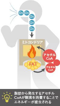 エネルギーと脂肪の関係