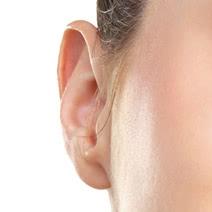 立ち耳の修正の施術