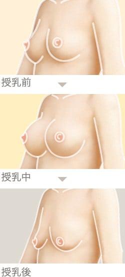 授乳前〜授乳後で起こるバストの変化