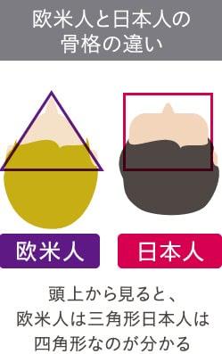 欧米人と日本人の骨格の違い